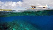 New Great Barrier Reef Coral Bleaching