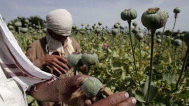 طالبان کروندګر مجبوروي
