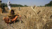 پنجاب: پر ۱۲ کلنې جينۍ د جنسي تېري بدل کې پر ۱۷ کلنې تېری شوی